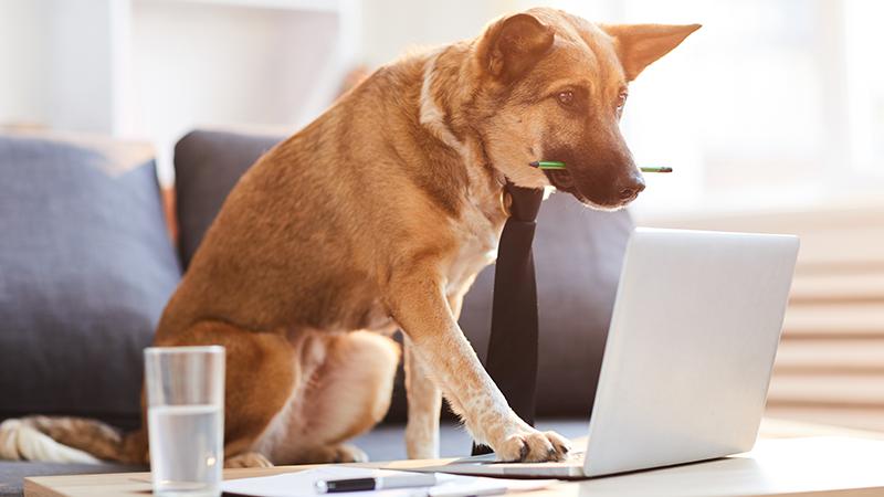 Blog firmowy – dlaczego warto go prowadzić iskąd czerpać pomysły natreści?